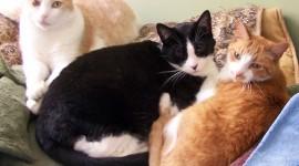 Three Cats Desktop Wallpaper Free