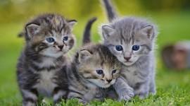 Three Cats Desktop Wallpaper HD