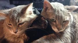 Three Cats Desktop Wallpaper HQ