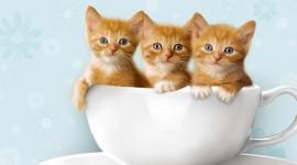 Three Cats High Quality Wallpaper