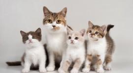Three Cats Wallpaper 1080p