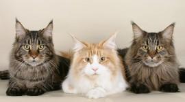 Three Cats Wallpaper Download Free