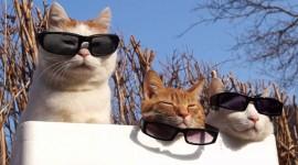 Three Cats Wallpaper For Desktop