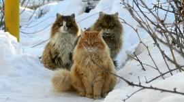 Three Cats Wallpaper Free