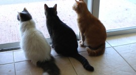 Three Cats Wallpaper Full HD