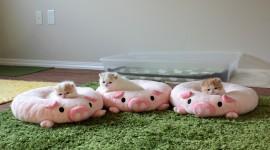 Three Cats Wallpaper Gallery
