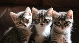 Three Cats Wallpaper HD