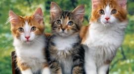 Three Cats Wallpaper HQ
