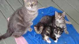 Three Cats Wallpaper High Definition