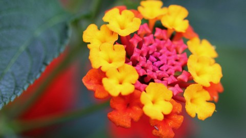Unusual Flowers wallpapers high quality