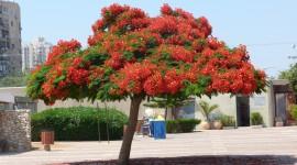Unusual Trees Photo Download
