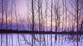 Winter Pictures Desktop Wallpaper For PC