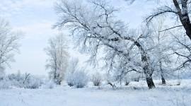 Winter Pictures Desktop Wallpaper#1