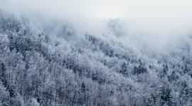 Winter Pictures Desktop Wallpaper#2