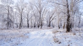 Winter Pictures Photo Download#1