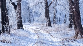 Winter Pictures Photo Download#2