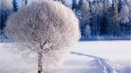 Winter Pictures Wallpaper Download