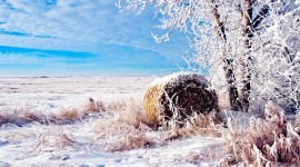 Winter Pictures Wallpaper Gallery