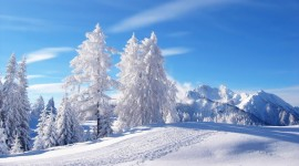 Winter Pictures Wallpaper#1