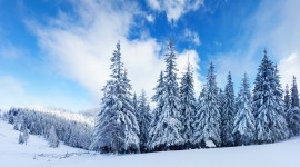 Winter Pictures Wallpaper#2