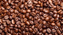 4K Coffee Grain Photo Download#2