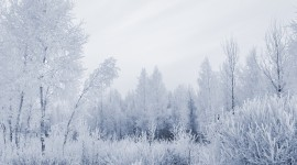 4K Frost Photo Download#1