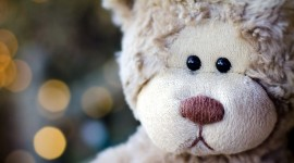 4K Teddy Bear Toy Best Wallpaper