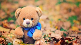4K Teddy Bear Toy Photo Free#1