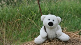 4K Teddy Bear Toy Photo Free#3