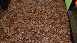 Arabica Grains Wallpaper Free