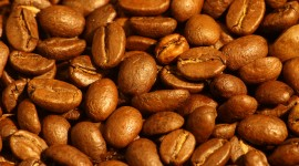 Arabica Grains Wallpaper HQ