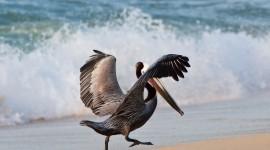 Birds On The Beach Best Wallpaper