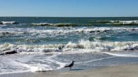 Birds On The Beach Desktop Wallpaper
