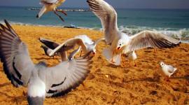 Birds On The Beach Desktop Wallpaper For PC