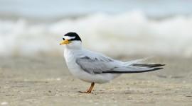 Birds On The Beach Wallpaper 1080p