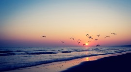 Birds On The Beach Wallpaper