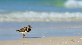 Birds On The Beach Wallpaper Download