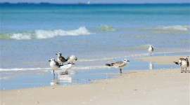 Birds On The Beach Wallpaper Download Free