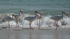 Birds On The Beach Wallpaper For Desktop