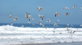 Birds On The Beach Wallpaper HQ