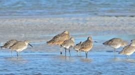 Birds On The Beach Wallpaper High Definition
