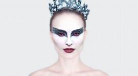 Black Swan Photo Download