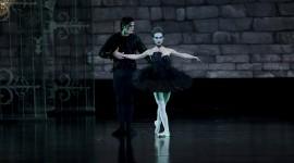Black Swan Photo#1