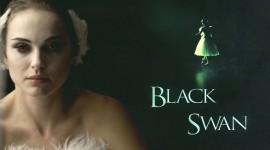 Black Swan Wallpaper For PC
