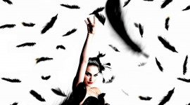 Black Swan Wallpaper Gallery