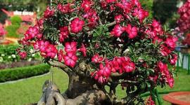 Desert Roses Wallpaper 1080p