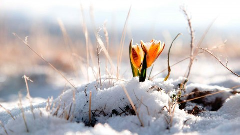 Early Spring wallpapers high quality