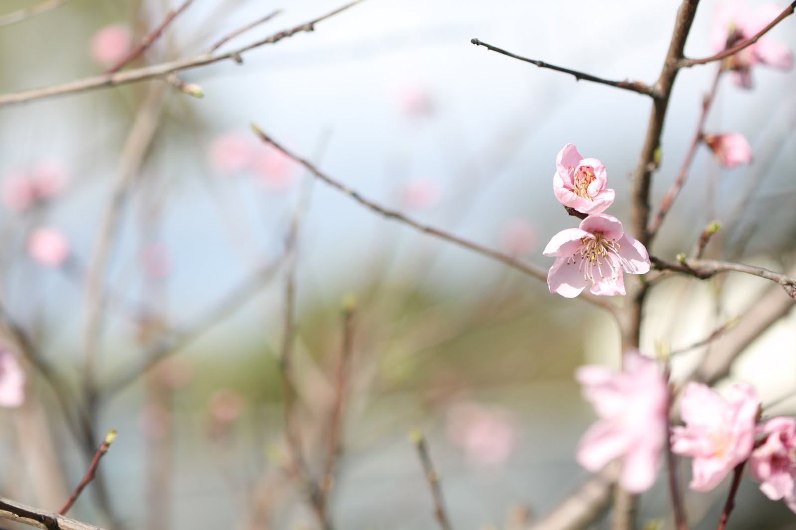 Early Spring Wallpapers High Quality | Download Free