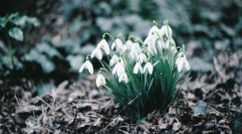 Early Spring Photo Download