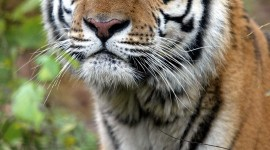 Endangered Species Wallpaper For IPhone Download